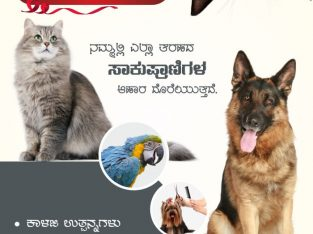 PET+ ( Your Pet Our Care)
